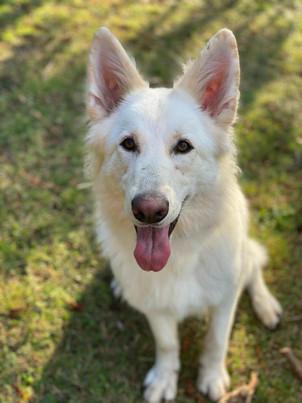 Cat - Happiest Hound � Owner - Danielle McLaughlin � Dog - Luna.jpg