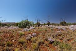 Tom Price landscape 001.jpg