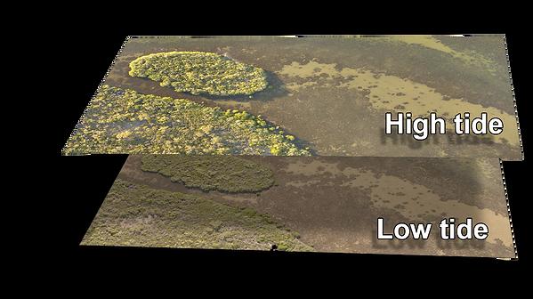 high tide low tide.png