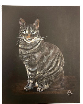 sam's cat.jpg