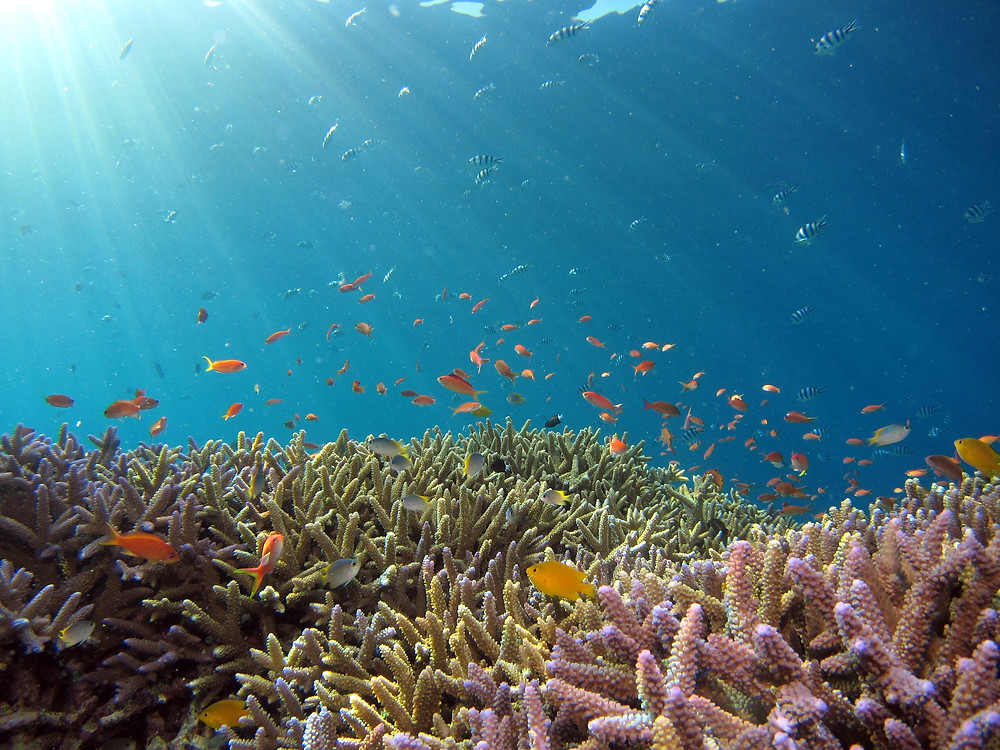 A school of fish, and colorful reefs