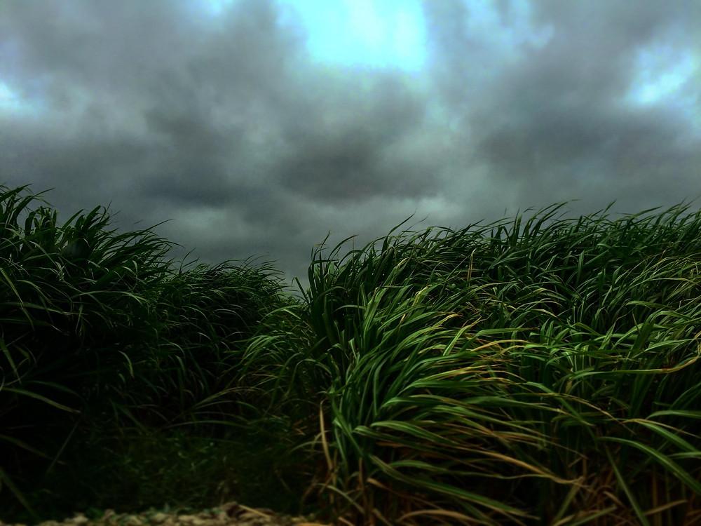 Bagasse (sugarcane)