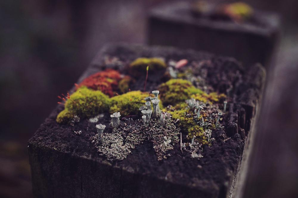 A fungi and compost
