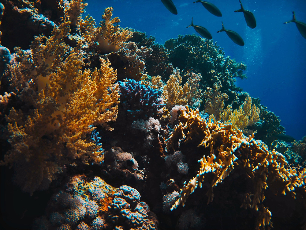 Colorful coral reef in the ocean