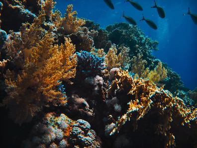Ya, Kita Dapat Menyelamatkan Terumbu Karang melalui Tabir Surya