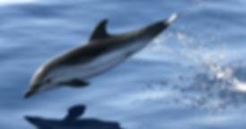 dauphin en mediterranee en bateau-location