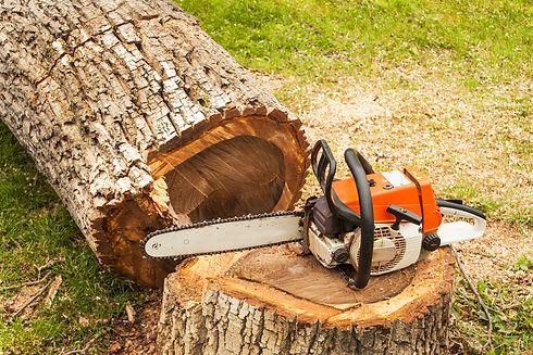 tree-trimming-3.jpg