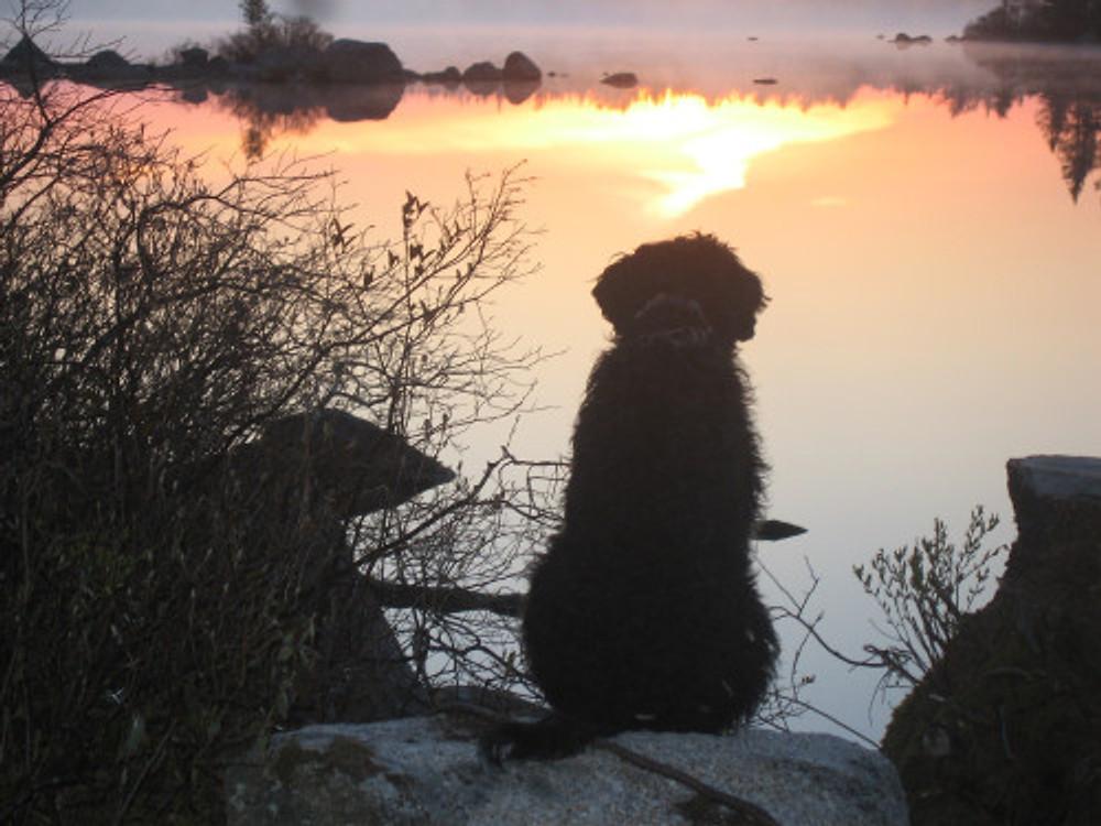 Lila at the lake