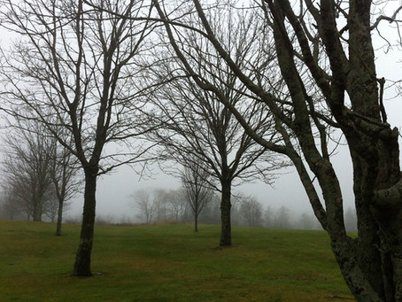 A foggy day on the golf course