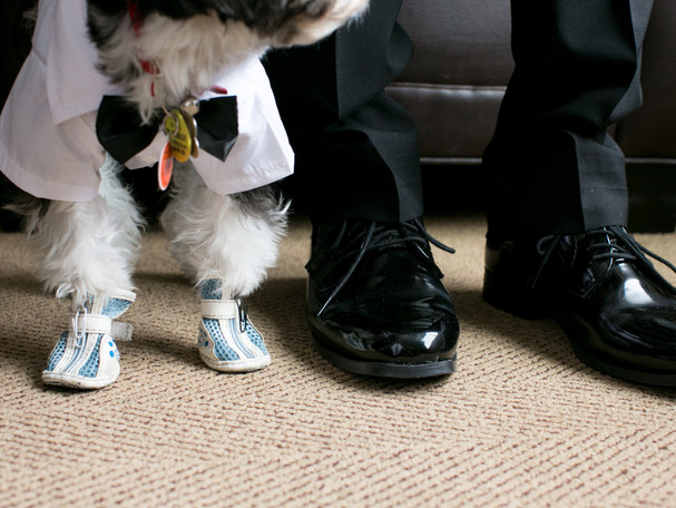 Toronto wedding photographer Little Blue Lemon captures candid wedding photo groom and dog's shoes