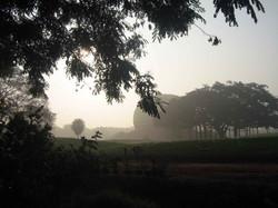 Matrimandir and Banyan Tree