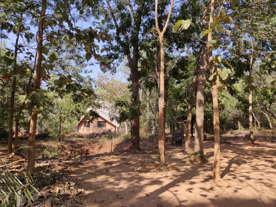 View through the dense plantation
