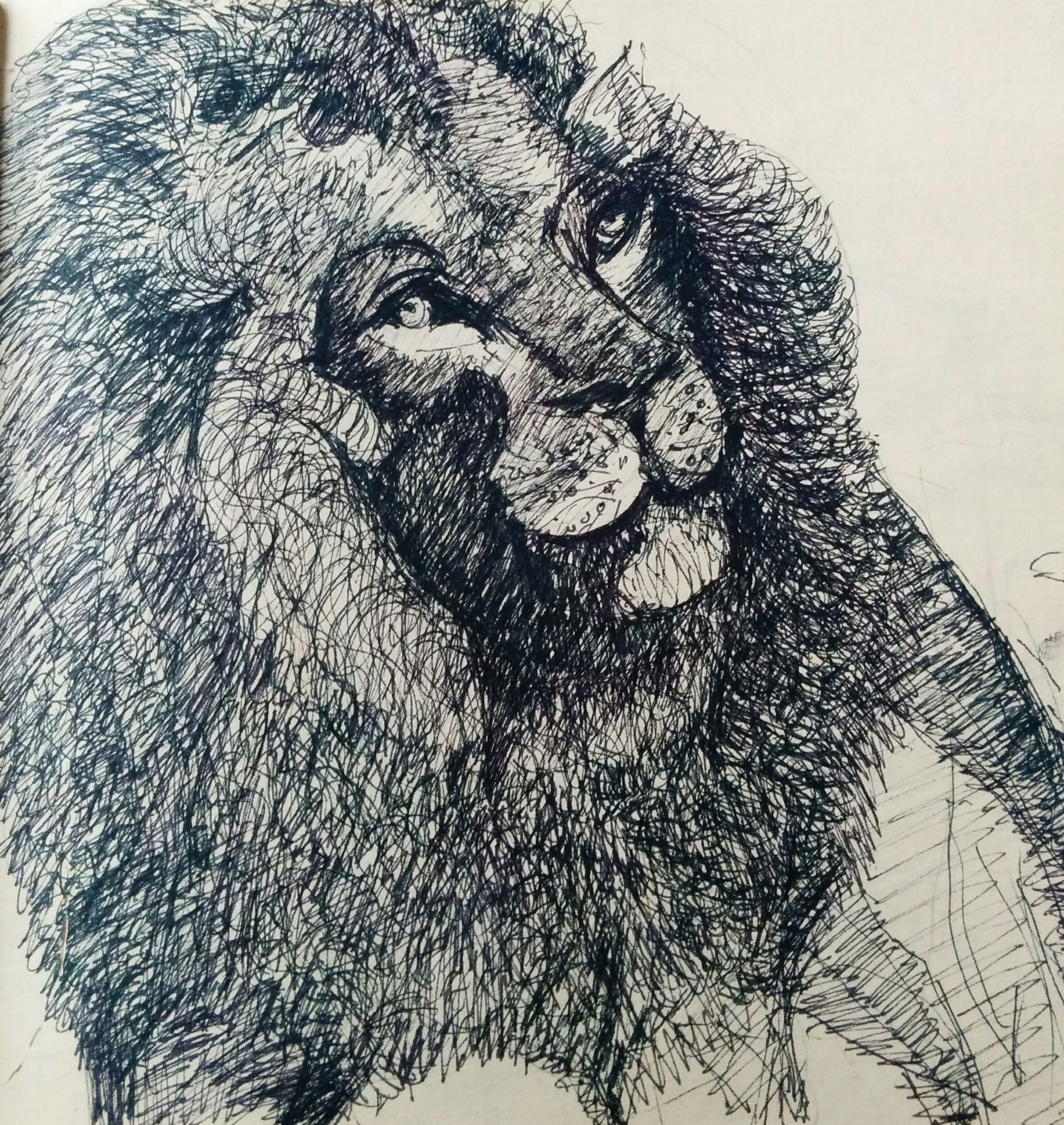 Sketch of lion