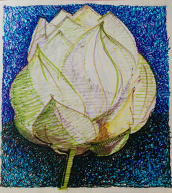 Sketch of a flower