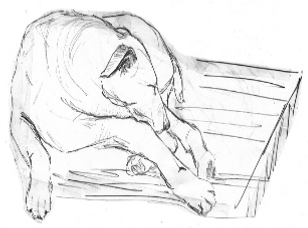 10.Dibujo_para_Jóvenes_y_Adultos_Nivel_