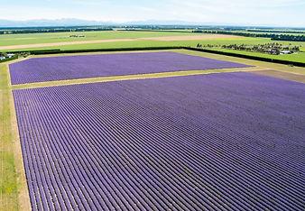 Aerial photo of NZLavender Farm.jpg