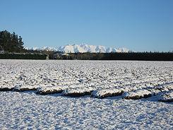 Lavender rows IV Winter snow.jpg
