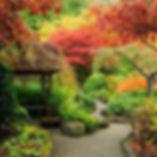 erables japonais1.jpg