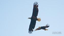 eagle (1).jpg