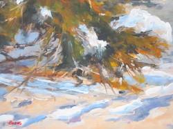 Snowy-Pines.jpg