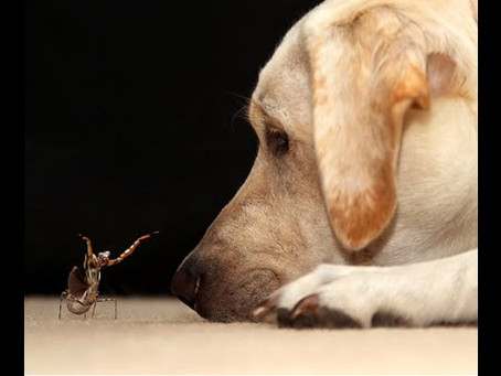 Your Dog, Creepy Crawlies and other Dangers!