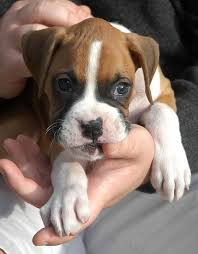 PUPPIES – REDUCING MOUTHING AND BITING