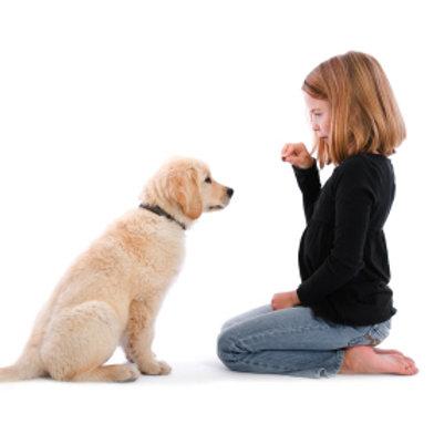 Kids Dog Training Workshop £20