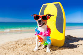 What to do with your dog when you go on holiday