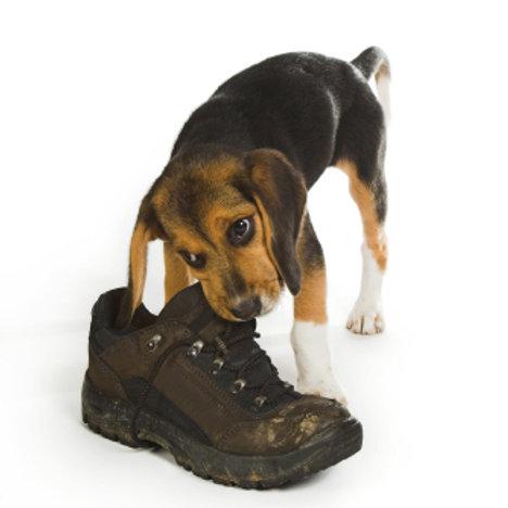 Puppy Home Visit - £75