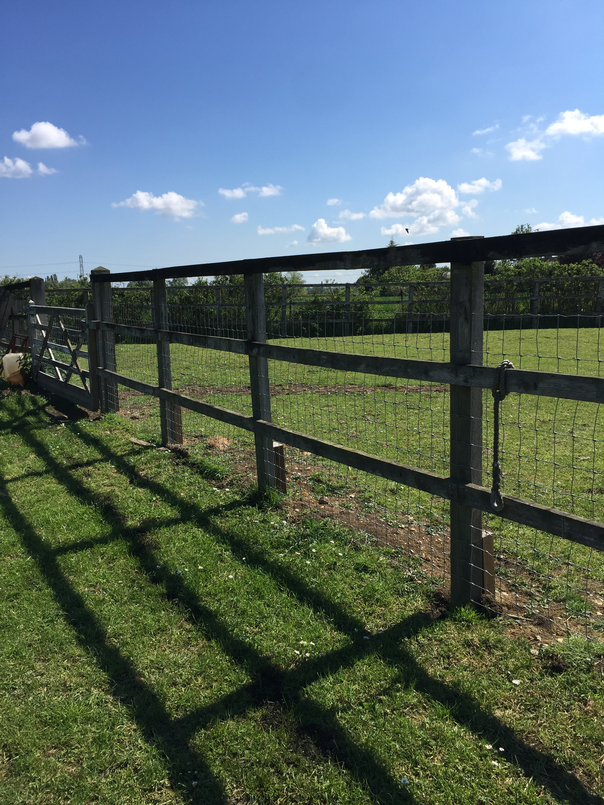 Secure Dog Field Hire - up to 6 dogs