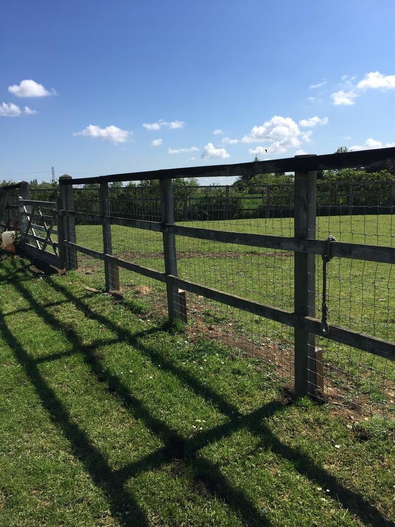 Fence 1.JPG