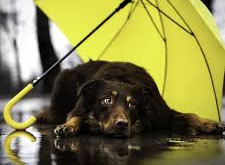 Entertaining your dog indoors