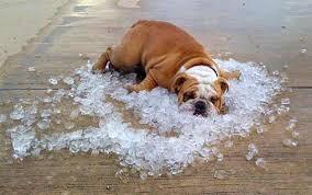 Heatwave: 8 Clever Tips