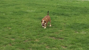 IS IT RIGHT TO LET YOUR DOG OFF LEAD?
