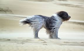 Does your dog like the wind in his face?