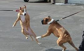 As a Dog Trainer I quite often have to advise my clients not to walk their dogs! Am I right?