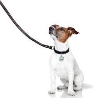 Dog Walking and Dog Training Service - £90