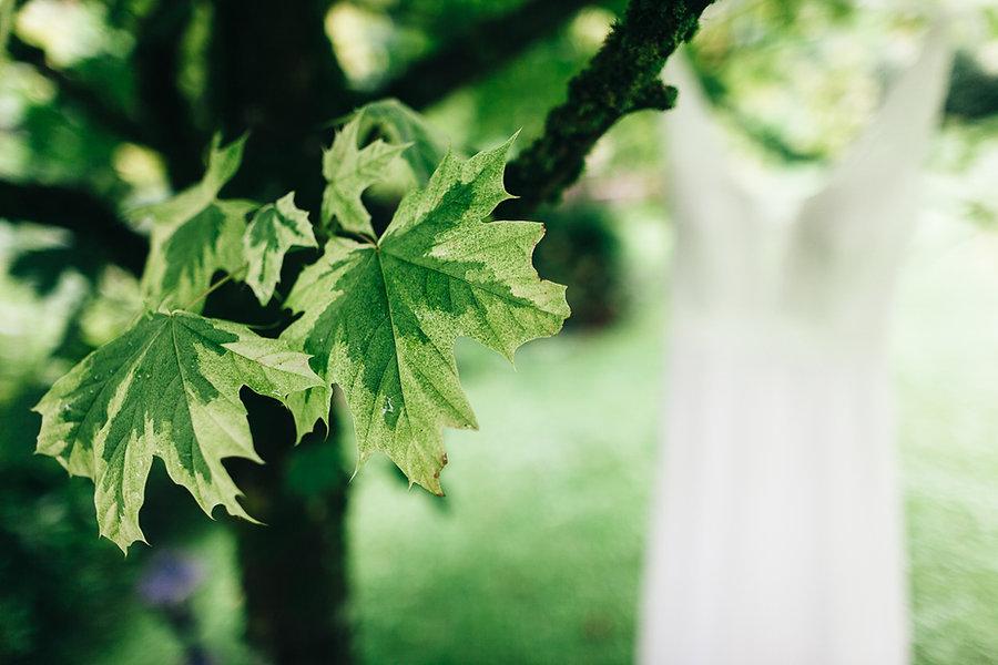 Blätter am Baum und Hochzeitskleid