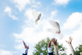 ~ Birds on Weddings ~