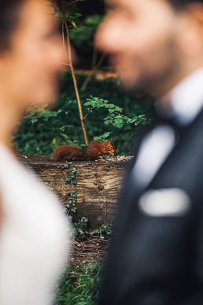 Eichhörnchen beim Brautpaarshooting