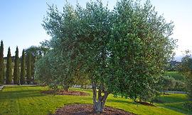corpoarte gift box special virgin olive