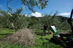 boutique olive oil