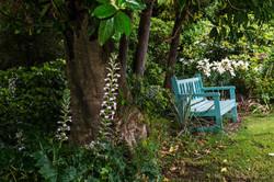 Paua Bay garden