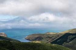 Paua Bay