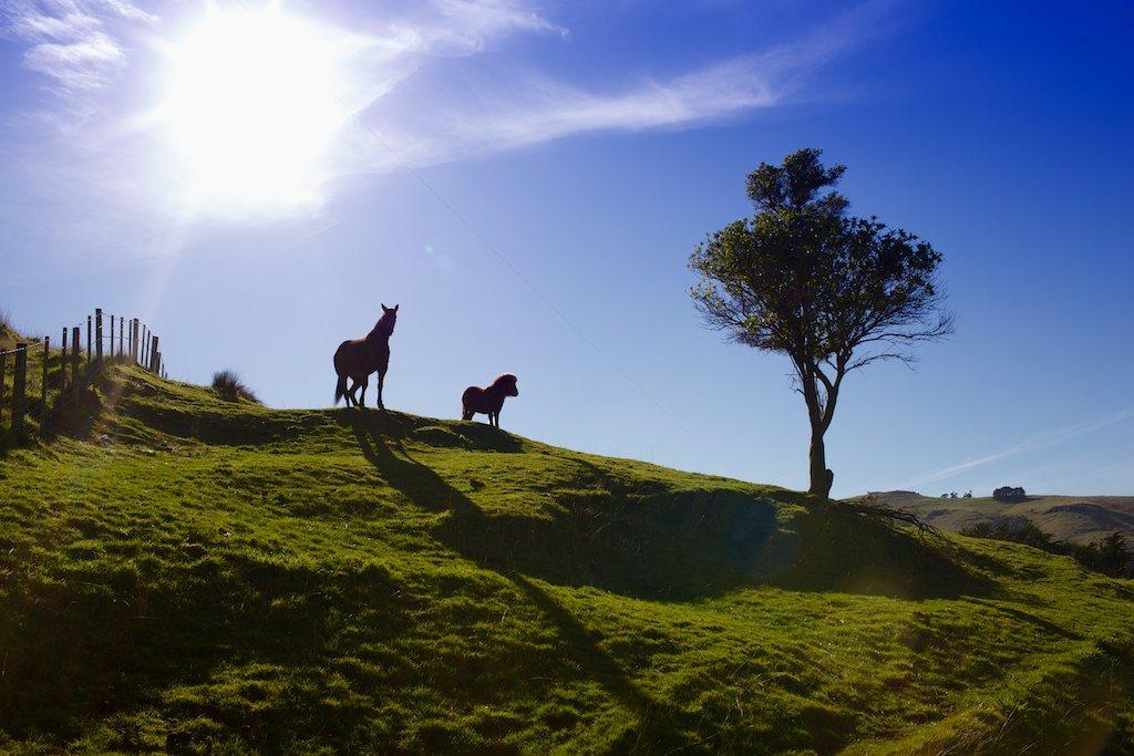 Sue's horses