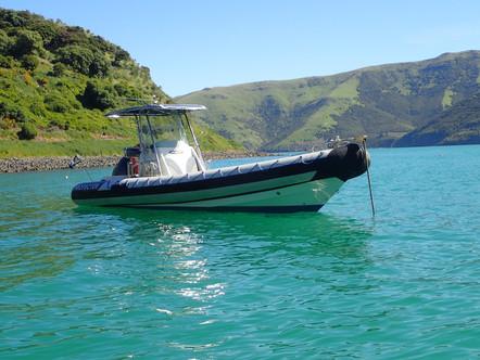 Onuku Dolphin Swimming boat
