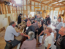 Shearing in the Woolshed