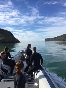 Onuku Dolphin Swimming trip
