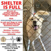 LCSO Animal Shelter is FULL