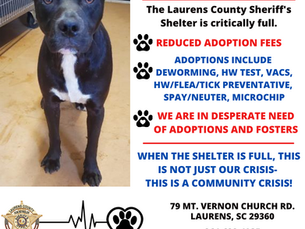 Animal Shelter in Emergent Situation